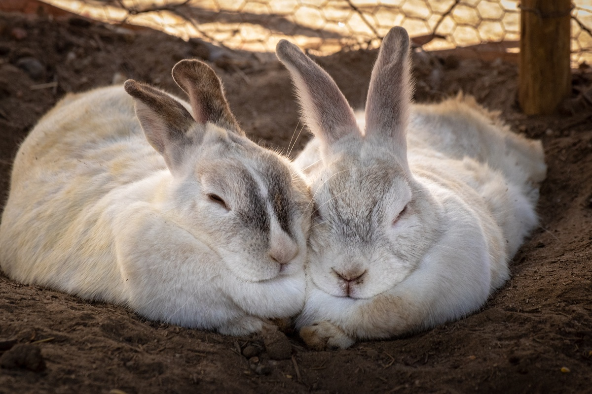 rabbit's personality and traits